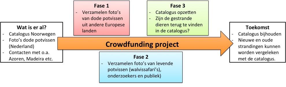 Planning potvissen project